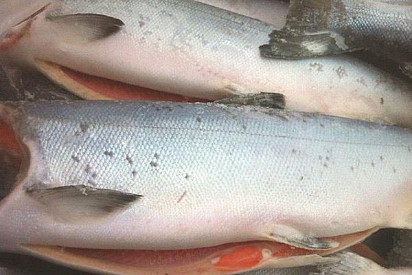 Whole King Salmon