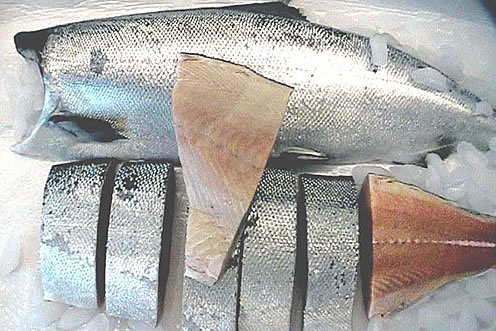 Whole White King Salmon