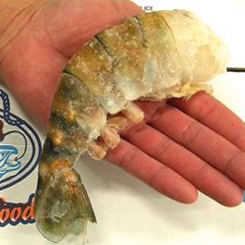 prawns-hand-size270w.jpg