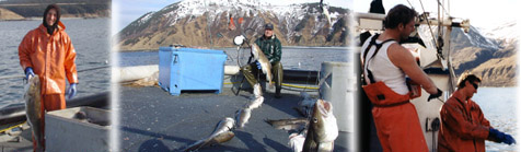 Alaska Shellfish
