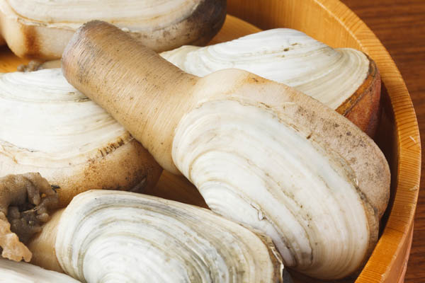 Geoduck Clams