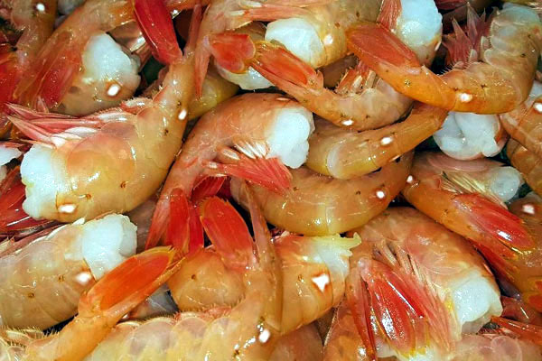Colossal Spot Prawns, The Cleanest, Purest Shrimp In The World